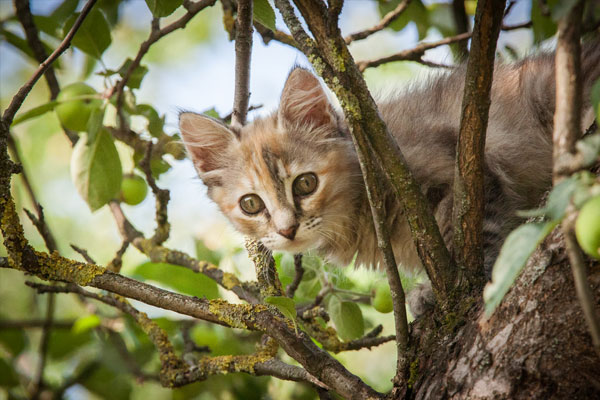 A colorful kitten climbing in the tree