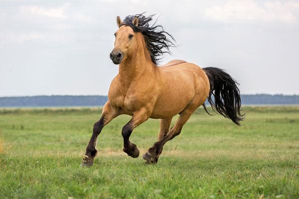 Beautiful bay horse.