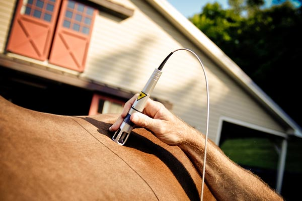 Horse Laser-Therapy Treatment
