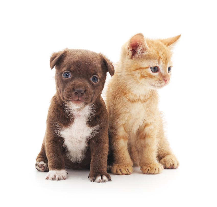 Puppy and kitten isolated on a white background