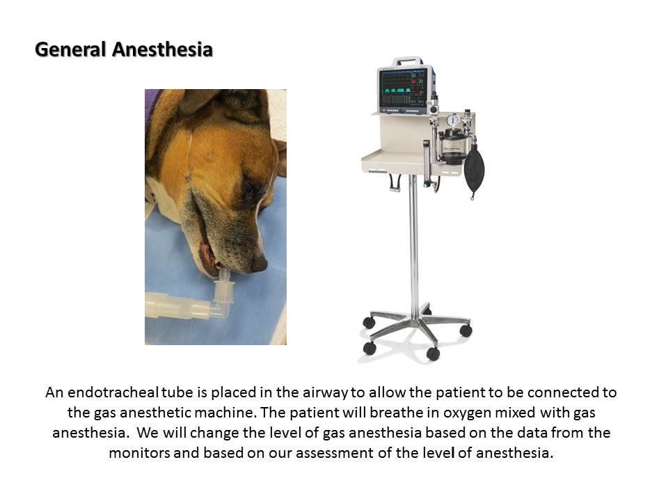 Dentistry Procedure at Associated Veterinary